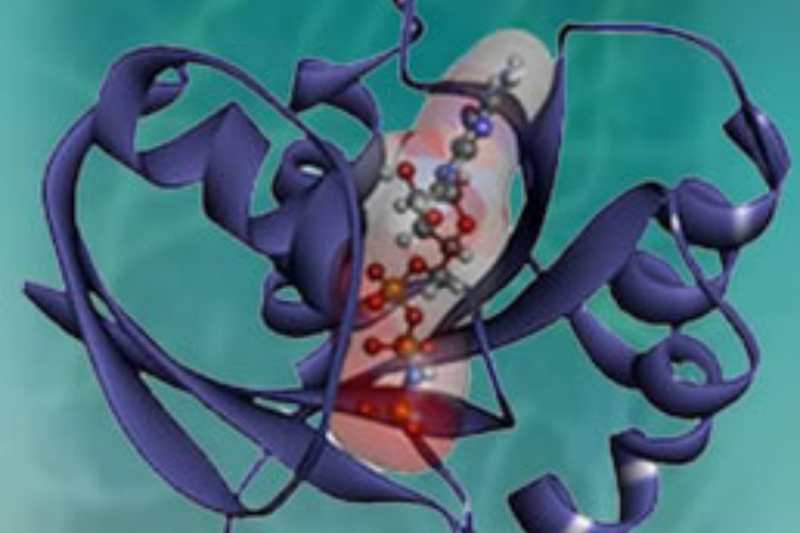 A color illustration of the KRAS protein, with blue helices wrapping around a core of balls and sticks